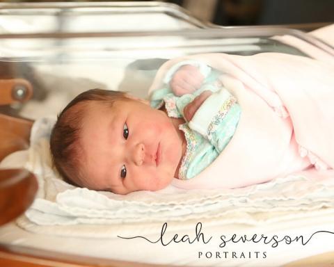 newborn portraits indianapolis
