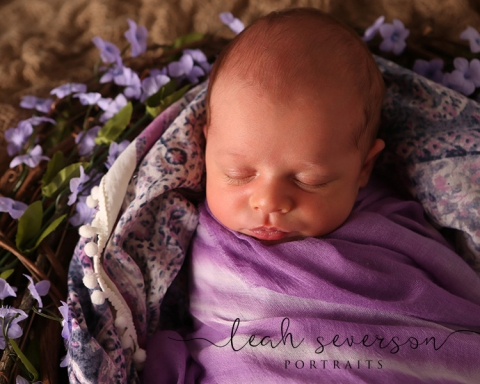 newborn photography of baby sloan